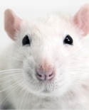 View profile for Rat Neurobehavioral Lab
